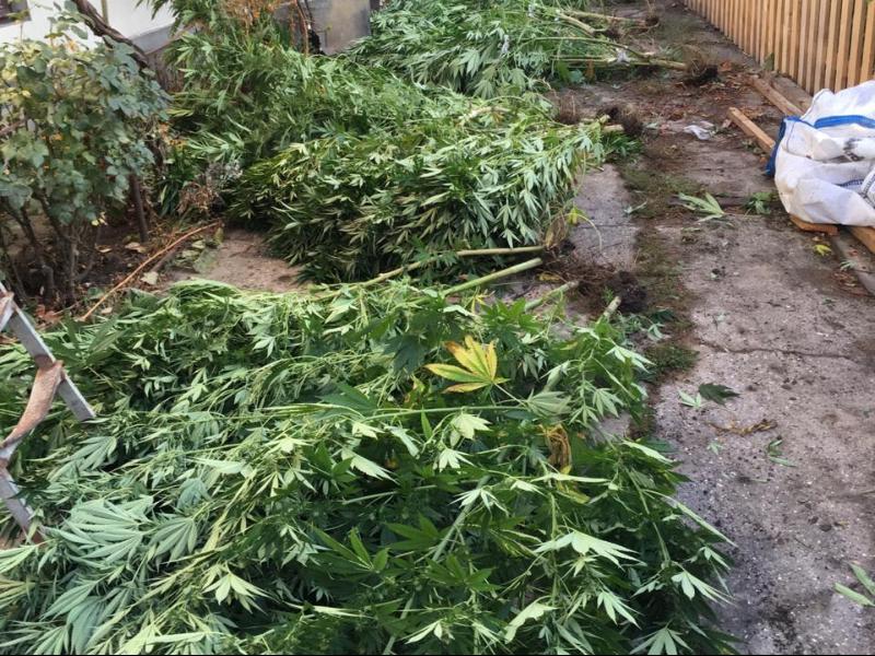 Граната для марихуаны пагубное влияние марихуаны i